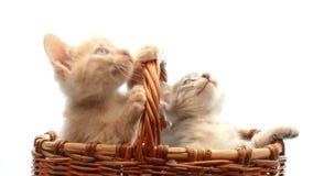 小猫一点 影视素材