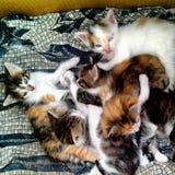 小猫一点 免版税库存照片