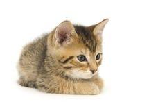 小猫休息 库存照片