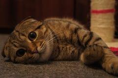 小猫休息 库存图片
