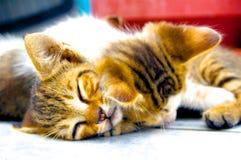 小猫休眠二 免版税库存图片