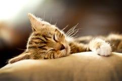 小猫休眠沙发 免版税库存图片