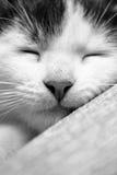 小猫休眠 免版税库存照片