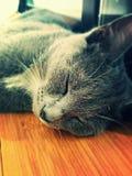 小猫作梦 库存照片