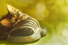 小猫使用与在被弄脏的背景的一双运动鞋 免版税库存图片