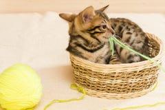 小猫使用与螺纹开会一个黄色球  免版税图库摄影