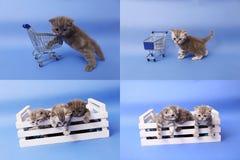 小猫使用与购物车的, multicam,屏幕在四部分中分裂了 免版税库存照片