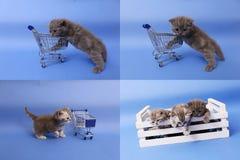 小猫使用与购物车的, multicam,屏幕在四部分中分裂了 免版税库存图片