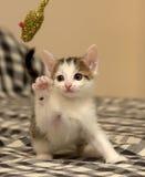 小猫使用的一点 免版税库存图片