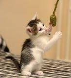 小猫使用的一点 图库摄影