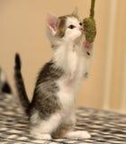 小猫使用的一点 库存照片