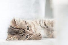 小猫使用-高钥匙 免版税库存图片