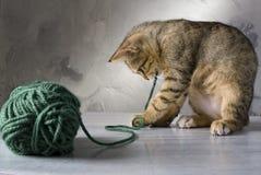 小猫使用 免版税库存图片