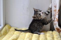 小猫使用 免版税图库摄影