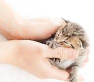 小猫可爱的平纹 库存图片