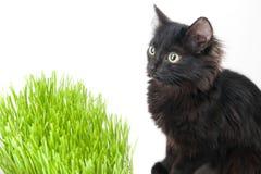 小猫吃一棵草 库存照片