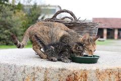 小猫和她的妈妈 图库摄影
