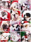 小猫和小狗与圣诞老人帽子 免版税库存照片