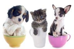 小猫和小狗在茶杯 免版税库存照片