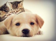 小猫和小狗睡觉 免版税库存图片