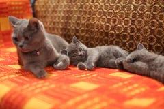 小猫和母亲一张红色手工制造地毯的 库存图片