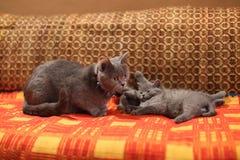 小猫和母亲一张红色手工制造地毯的 免版税库存图片