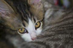 小猫和母亲 免版税库存照片