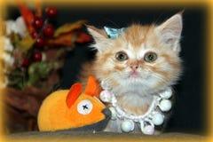 小猫和被捉住的老鼠 库存照片