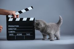 小猫和clapperboard 图库摄影