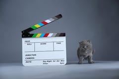 小猫和clapperboard 库存照片