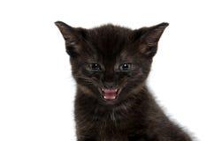 黑小猫哭泣 免版税库存照片