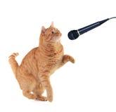 小猫唱歌 库存照片