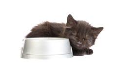 黑小猫喝牛奶,在白色背景 免版税图库摄影