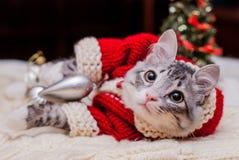 小猫圣诞老人 库存照片
