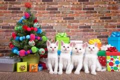 小猫圣诞节四重唱由树的 免版税库存照片