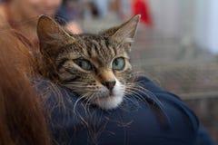 小猫在一个志愿者的手上一个风雨棚的无家可归的动物的 免版税图库摄影