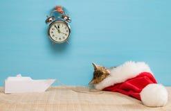 小猫在一个红色盖帽睡觉,在蓝色背景一个闹钟的幻觉睡眠干扰的 图库摄影