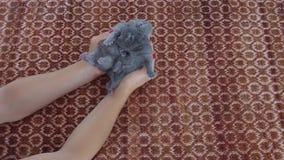 小猫在人的` s手上 影视素材