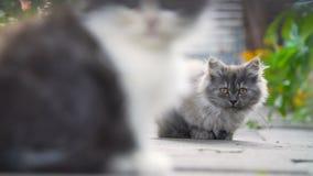 小猫在后院 股票视频
