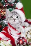 小猫在圣诞老人帽子 免版税库存照片