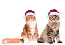 小猫在圣诞老人帽子 免版税库存图片