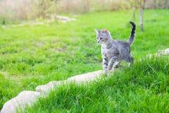小猫在庭院里 库存照片