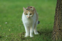 小猫在庭院里 库存图片