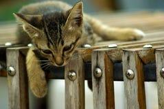 小猫在木板箱放松 免版税库存照片