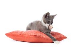 小猫在枕头放置 库存图片