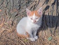 小猫在步行离开 图库摄影