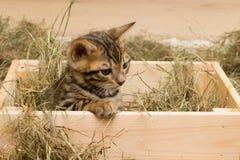 小猫在箱子,坐那里权利是题字的一个地方 库存图片