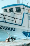 小猫在船的背景中 免版税库存照片