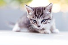 小猫在阳光下在日落 库存图片
