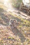 小猫在阳光下 库存图片